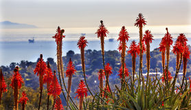 Piattaforme petrolifere arancio del paesaggio dell'oceano Pacifico di mattina del cactus dell'aloe Immagine Stock