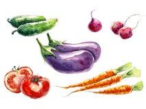 Piatto con differenti varietà di zucche d illustrazione vettoriale