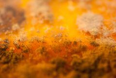 Piatto dei batteri Fotografia Stock