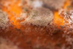 Piatto dei batteri Fotografia Stock Libera da Diritti