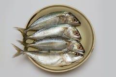 piatto dello sgombro fresco per il cuoco immagine stock libera da diritti