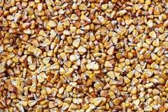 Piatto in pieno dei semi gialli secchi del cereale Immagine Stock