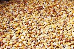 Piatto in pieno dei semi gialli secchi del cereale Immagini Stock
