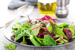 Piatto vegetariano sano, insalata frondosa con la bietola fresca, rucola, spinaci e lattuga Miscela italiana immagine stock libera da diritti