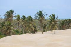 Piaui,巴西沙丘  免版税库存照片