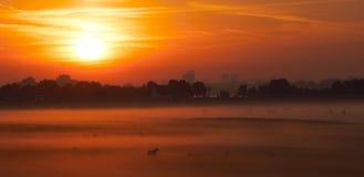 Piaulement hors du brouillard photographie stock