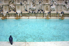 piazza Del campo Fontanna Siena obraz stock