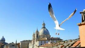 Piazza Navona e gabbiano Immagine Stock Libera da Diritti