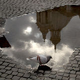 Piazza Navona Puddles Royalty Free Stock Photo