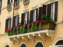 Piazza Navona Windows Immagine Stock Libera da Diritti