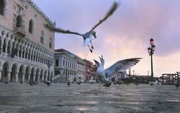 Piazza San Marco in the morning stock photography