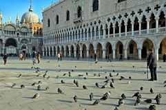 Piazza San Marco in winter morning Royalty Free Stock Photography
