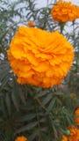 PIC étroite de fleur Photographie stock
