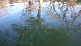 PIC καθρεφτών του δρύινου δέντρου Στοκ Φωτογραφίες