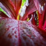 Pic дождливого дня Стоковые Изображения RF