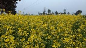 Pic красивых цветков в поле моей деревни Стоковые Изображения RF