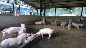 Pic-Bauernhof lizenzfreie stockbilder
