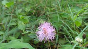 PIC bonito da flor imagem de stock royalty free
