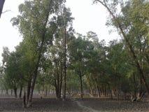 Pic della foresta fotografia stock