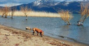 Dog on lake shore Royalty Free Stock Photos