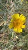 PIC gentille de fleur image stock