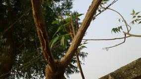 PIC gentille pour l'arbre image stock