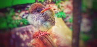 PIC pequeno bonito do pássaro fotografia de stock royalty free