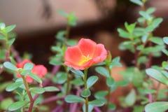 Pic schietto alla tonalità verde rossa e gialla del giardino e fotografie stock libere da diritti