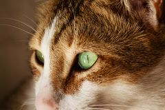 Pic van kat in Sharjah stock afbeeldingen