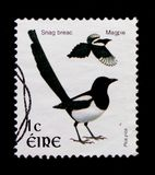 Pica commun de pica de pie, serie 2002-2004 de Definitives d'oiseau, vers 2002 Image stock