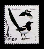 Pica comune di pica della gazza, serie 2002-2004 di Definitives dell'uccello, circa 2002 Immagine Stock