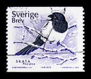 Pica euroasiatico di pica della gazza, serie degli uccelli, circa 2001 Fotografia Stock
