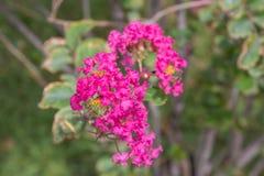 Pica la flora Imagen de archivo