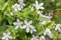 Pica macro floral Imagen de archivo
