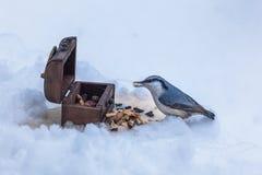 Pica-pau-cinzento perto do alimentador na neve fotos de stock royalty free