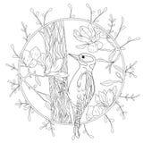 Pica-pau estilizado dos desenhos animados no ramo de árvore Entregue o esboço tirado para a página antistress adulta da coloração ilustração stock