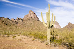 Picacho mountains Stock Images