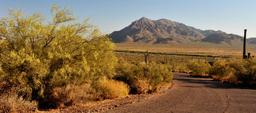 At the Picacho Peak Stock Images