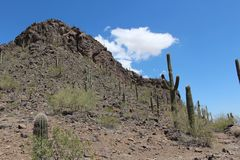 Picacho Peak Arizona Desert Landscape Stock Images