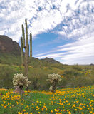 Picacho Peak State Park Stock Photo