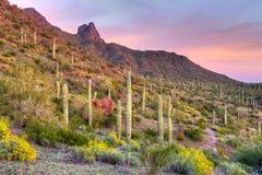Picacho Peak Royalty Free Stock Photo