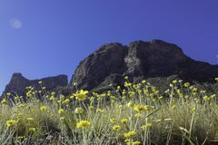 Picacho Peak with Wildflowers royalty free stock photography