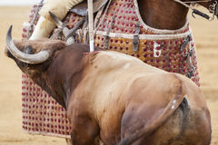 Picador bullfighter, lancer whose job it is to weaken bull's Stock Photo