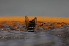 Picadura de abeja macra imagen de archivo libre de regalías