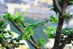 Picadura del pájaro del loro en árbol foto de archivo