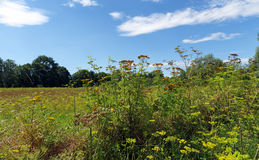Picardy country in summer season Royalty Free Stock Photo