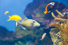 Picasso Fish Royalty Free Stock Images