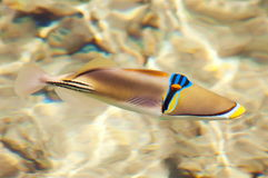 Picasso fish Stock Images
