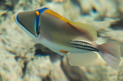 Picasso fish Royalty Free Stock Photography