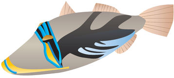 Free Picasso Trigger Fish Stock Photography - 32721412